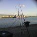 vissen in havens