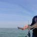 haaien maar vooral schar gevangen vangstberichten mei 2020